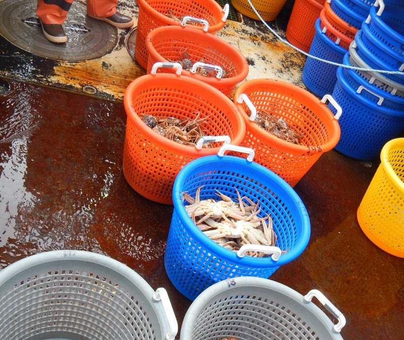 Ongoing Side-By-Side Trawl Surveys