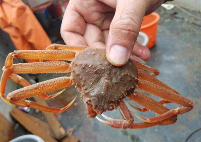 2012 Tanner Crab Net Efficiency Pilot Survey