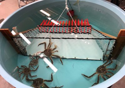 Gear Design to Reduce Crab Bycatch